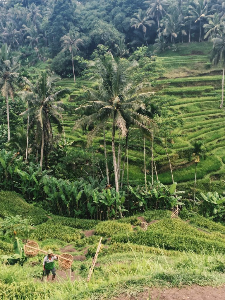 Tegalalang Rice Terrace Ubud Indonesia